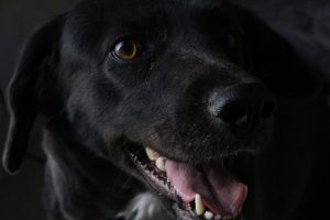 beste hondenvoer kopen tips